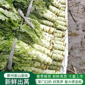新鲜莴苣上市卡这样,家门口好蔬菜!质量好要跪下,价格便宜...