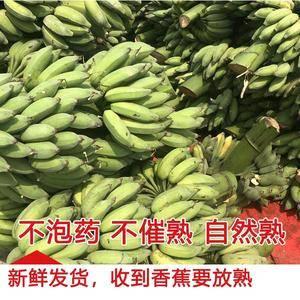 南宁本地千亩蕉地,广西特产西贡蕉,小米蕉,香蕉,现砍摘现...