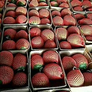 我基地万亩红玉大量上市。经过多年培育改良五级地西瓜,以其...