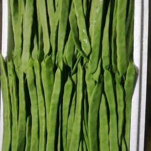 绿扁豆 扁豆夹 长度15厘米   宽度2厘米 10元...