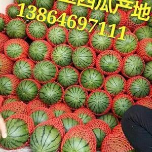 潍坊市果蔬种植专业合作社,早春红玉西瓜,墨童西瓜,超越梦...