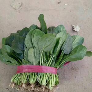 菠菜上市  15938929612