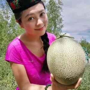 新疆吐鲁番火焰山哈密瓜,西州蜜25号,即将上市
