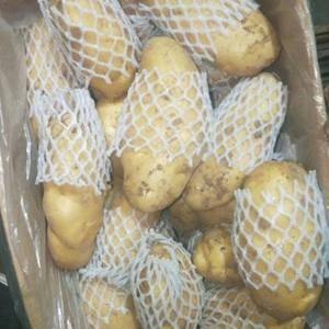 常年供应冷库荷兰十五土豆,2两通天,3两通天,4两起步通...