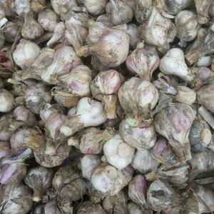 邳州苔蒜头已大量上市,有需要的请联系。
