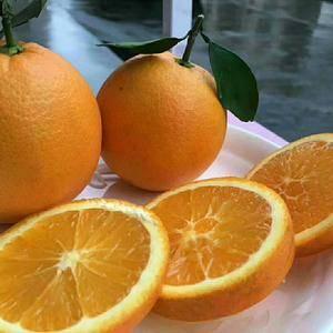 热卖优质夏橙挂树鲜果产地一手货愿看园釆果