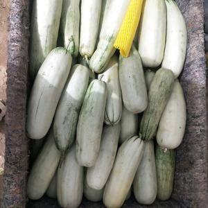 这里是中国瓜果蔬菜第一县——山东莘县。我们镇上有全中国最...