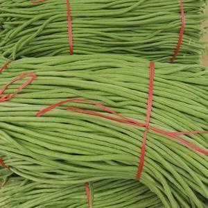 山东莒县大棚优质绿龙长豆角上市了,豆角长度60厘米以上,...
