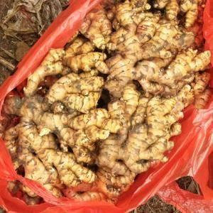 湖南生姜产地常年销售优质姜种,小黄姜,姜母,产地常年有姜...