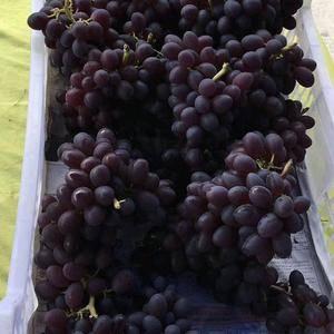 纯天然,无激素,巨峰葡萄口感适宜