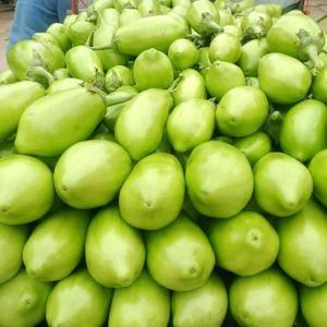 青皮茄子质量好货多价格低几关,有需要的联系152248584...