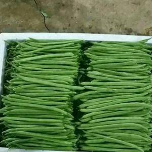 云南芒市蔬菜种植基地九月份种植十一月份大量上市到来年四月...