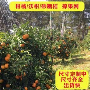 沃柑撑果网挂果网甘桔柑橘砂糖橘挂果网撑果网