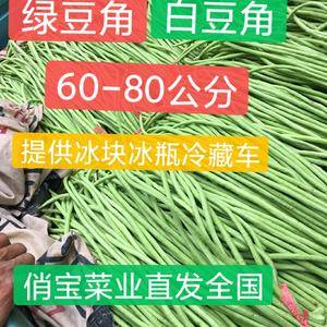 山东淄博高青万亩秋季豆角产区欢迎您跑回。白豆角引起大。绿豆角大量供...