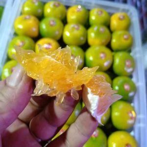 特早蜜橘 柑桔大芬四号口感甜爽细皮无籽