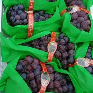 果型好,口感鲜美。欢迎参观,品尝,收购。