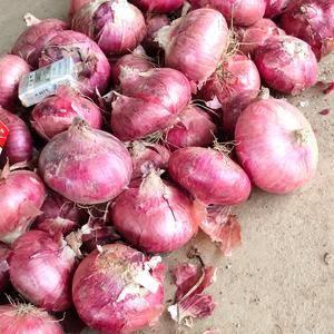 山东济南冷库洋葱大量出库供应中,大红,二红,紫洋葱大量供...