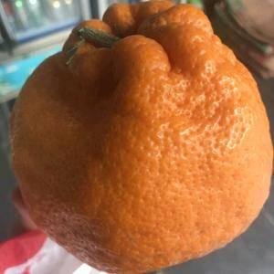 丑橘 不知火 全国直发 农户一手货源 咨询电话13907...