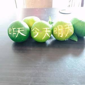 湖北宜昌夷陵区,早熟桔子大量上市,口感甜,颜色黄,皮薄汁...