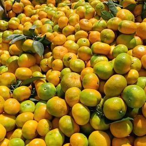陕西城固年产25万吨优质柑橘,欢迎各地客商前来洽谈,可代...