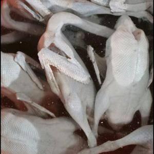 宰杀清远黑棕棚鹅开膛(7—9)19一斤 冻棚鹅16元一斤...