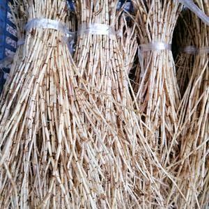 大量提供野生白茅根,长期供应