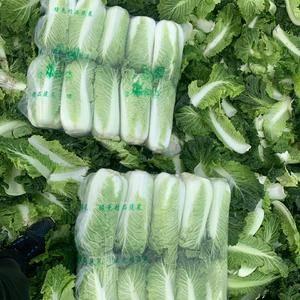 精品黄心菜、三号白菜、甘蓝、芥菜,需要联系1563331...