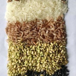 旱稻五彩养生米属糙米,旱稻不同于水稻,旱稻性温属阳具有养...