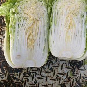 大白菜,品种小义和秋
