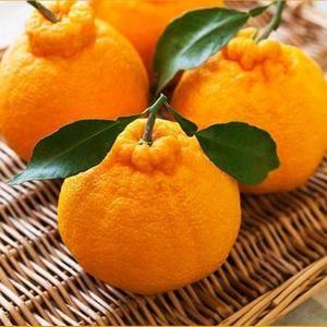 丑桔,纽荷尔脐橙,蜜桔,密柚产地一手货源直销,口感超甜,...