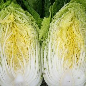 白菜大量上市有需要可以联系