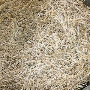 大量长期供应野生白茅根,鲜货,干货,电话17628675...