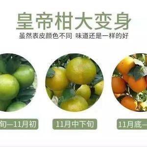 【现货速发】广西皇帝柑带箱十斤果径55以上应季水果,现摘...