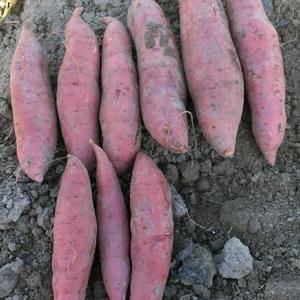 本人有自家做的纯手工红薯粉出售狂怒中,可批发挺聪明,可零售!买多优惠...