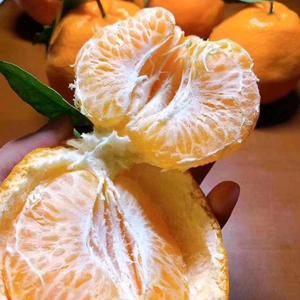 精品碰柑70-80的橘子,30万斤15083818111