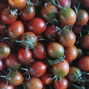 福建漳浦小番茄圣女果.无公害.色泽鲜艳.果粒饱满.口感有...