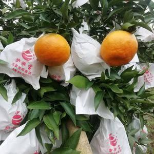 雁江蜜橘,电话13982969675,四川资阳雁江蜜橘之...