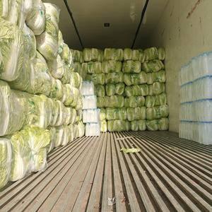 大量供应青杂三号白菜