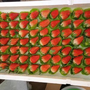 草莓哥常年供应绿色甜宝草莓。电话:15165849828