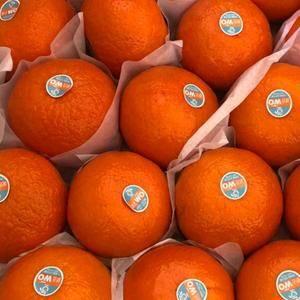 场地:安徽芜湖 100亩橘子树/9000棵树 目前有...