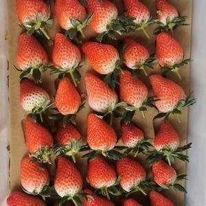 唐王甜宝奶油草莓降价中