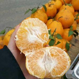 耙耙柑大量出售果园承包户,品质有保障四川乐山