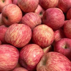 15263361626,山东红富士苹果产地大量批发直销,...