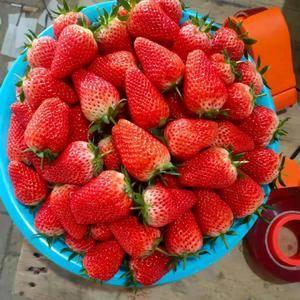 供应,甜宝草莓,产地直发,量大实惠,口感纯正青岛平度代办...