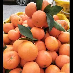 沃柑品质好看广西省河池,有需要备年货的想吃新鲜沃柑,当天...