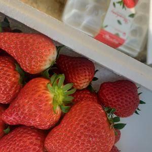 满城区九九草莓