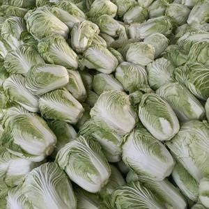 山东聊城万亩蔬菜基地 ,大白菜大量供应中 ,需要的老板联...