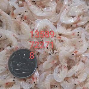 诚信经营虾皮,海米,磷虾,银针鱼,烤虾,磷虾米,凤尾鱼,...