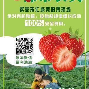 《草莓》绝对有机种植,自然规律缓长成熟,100%安全食用...