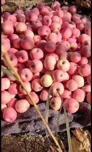 18315699088大量冷库红富士苹果品质好脆甜需要的...
